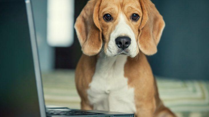 Mit dem Hund im Büro worauf muss ich achten